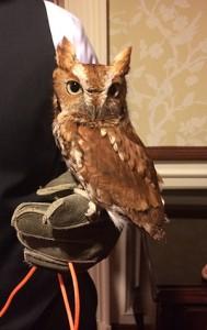 owl_gvnc_web